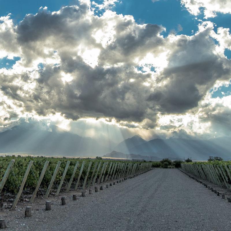 Argentina tiene su Disneyland del vino