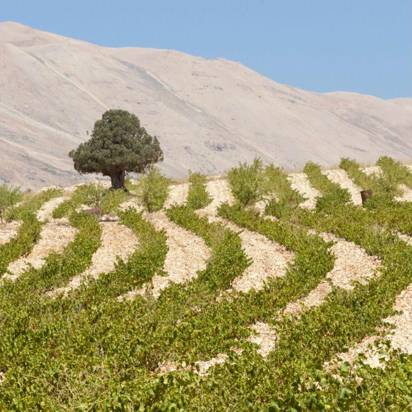 Líbano: la potencia vitivinícola del Cercano Oriente