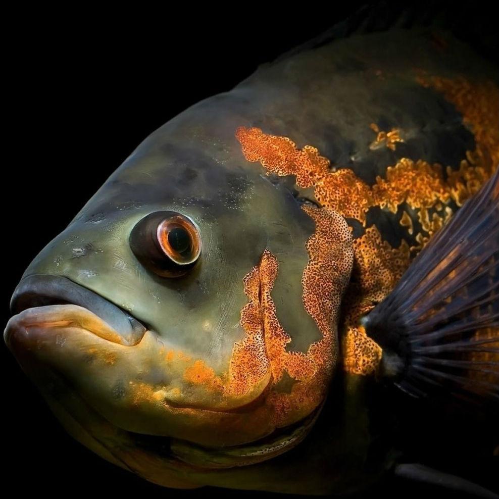 Tintos y pescados, sí