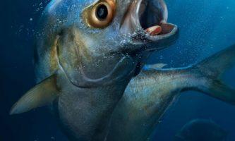 pescadocuadrado