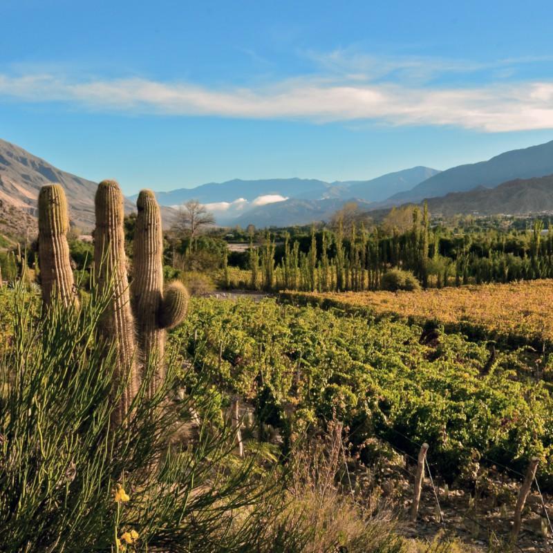 Los viñedos de la Quebrada de Humahuaca